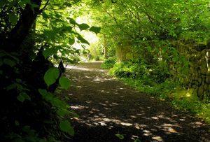 leafy glade
